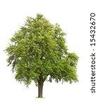 tree isolated against white ... | Shutterstock . vector #15432670