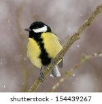 Great tit stands on branch on snowy weather