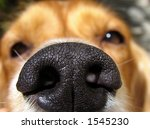 My Dog  Chance  Sniffing The...