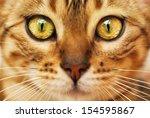 Stock photo bengal cat 154595867