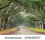 Row Of Southern Oak Trees With...