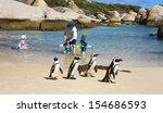 boulders beach  south africa  ... | Shutterstock . vector #154686593