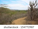dry forest on the coast in west ...   Shutterstock . vector #154772987
