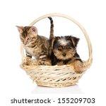 Purebred Bengal Kitten And...