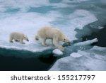 High Angle Of Mother Polar Bea...