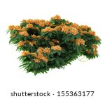 Plant Flower Bush Isolated.