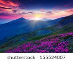 magic pink rhododendron flowers ... | Shutterstock . vector #155524007