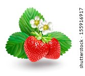 strawberry with leaves and... | Shutterstock . vector #155916917