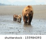 coastal brown bears | Shutterstock . vector #155984393
