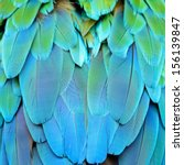 Colorful Feathers  Harlequin...