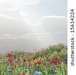 wheat field with flowers   Shutterstock . vector #15614224