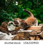 Stock photo adorable tabby kitten 156233903