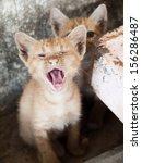 cat pet kitty | Shutterstock . vector #156286487