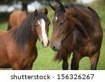 Beautiful Brown Horses On...