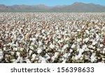 fields of cotton | Shutterstock . vector #156398633
