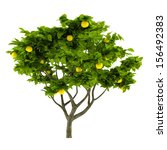 Citrus Lemon Tree Isolated
