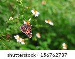 butterfly feeding on the flower ...   Shutterstock . vector #156762737