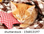 Stock photo cute little red kitten sleeps in plaid close up 156813197