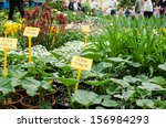 Assorted Plants For Sale In...