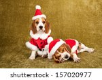 Beagle Puppies Dressed In Sant...