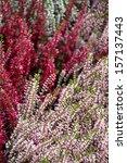 erica flowers macro
