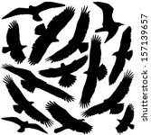 predator silhouette | Shutterstock .eps vector #157139657