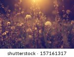 vintage photo of dandelion... | Shutterstock . vector #157161317