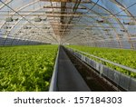 Covered Greenhouse With Two...