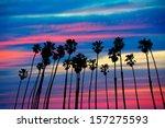 California Palm Trees Group...