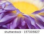 Lotus Flower Pollen Close Up