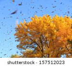 autumn tree with falling leaves | Shutterstock . vector #157512023