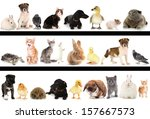 Stock photo collage of different cute animals 157667573
