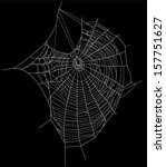 spider web detailed vector...