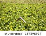 vineyards of the western cape ... | Shutterstock . vector #157896917