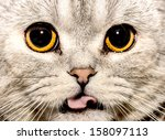 portrait of a cat | Shutterstock . vector #158097113
