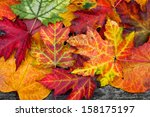 abstract background of autumn... | Shutterstock . vector #158175197