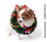 chihuahua dog with christmas... | Shutterstock . vector #158224313