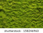 Moss Texture  Background With...
