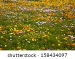 carpet of beautiful wild... | Shutterstock . vector #158434097
