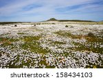 spring wild flower carpet  west ... | Shutterstock . vector #158434103