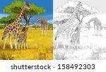 safari   giraffes   coloring... | Shutterstock . vector #158492303