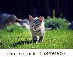 Stock photo little kitten 158494907