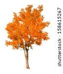 Orange Autumn Tree Isolated On...