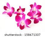 pink orchid  | Shutterstock . vector #158671337