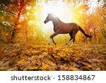 Beautiful Autumn Background  ...