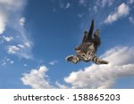 Young Kitten Jumps And Glide...