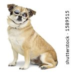 Dog wearing goggles - stock photo