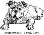 hand drawn english bulldog | Shutterstock . vector #159072593