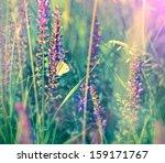 White Butterfly On Wild Flower...