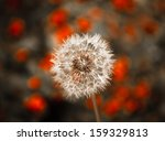 Dreamy Dandelion On Abstract...